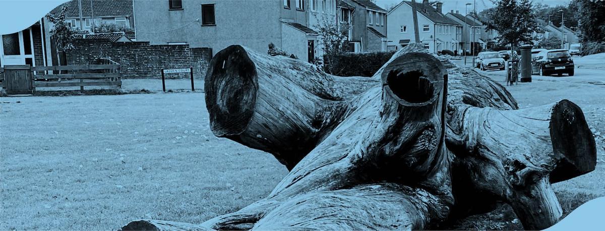 Old fallen tree